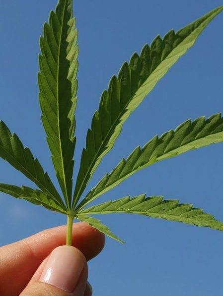 El Centro Gives Final Approval to Cannabis Ordinance