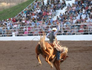 Bronc rider Wade Michael Brown