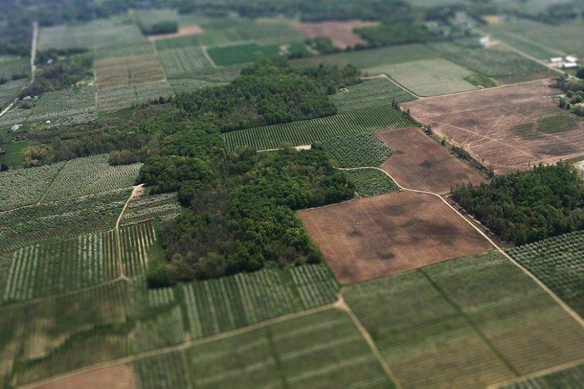 Farmland, Pest Adviser