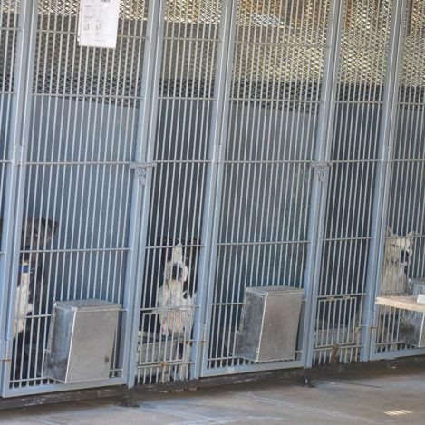 Border Paws Nears Goal to Improve Animal Shelter